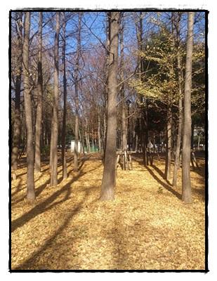 城北中央公園 銀杏並木