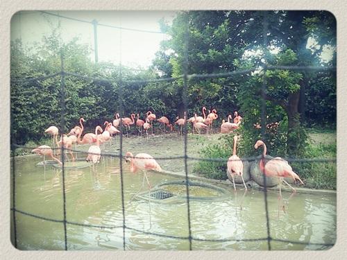 上野動物園フラミンゴ!