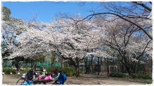 城北中央公園 お花見