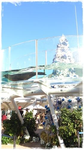 サンシャイン水族館 クリスマスツリー