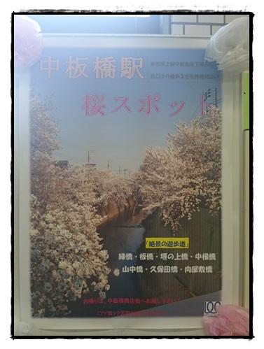中板橋駅 桜スポット
