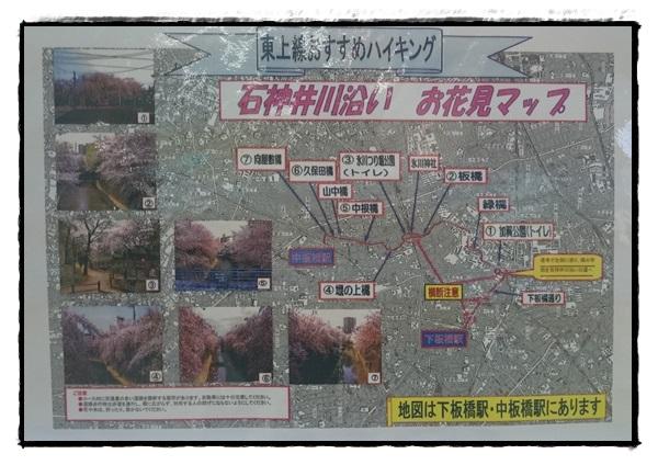 石神井川沿い お花見マップ