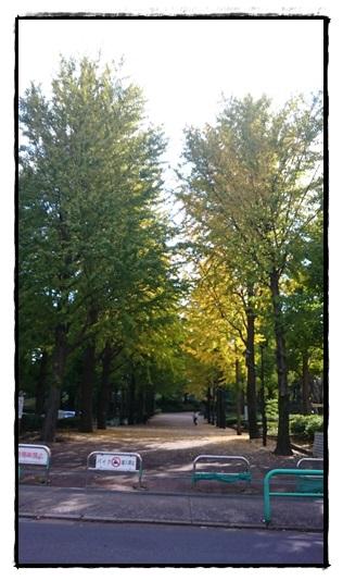 城北中央公園の紅葉!