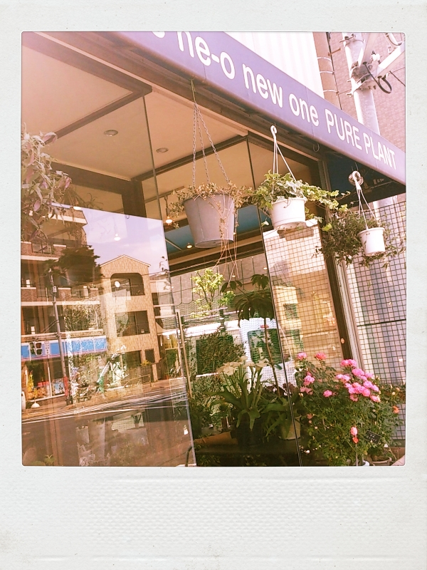 PURE PLANT 東新町 花屋
