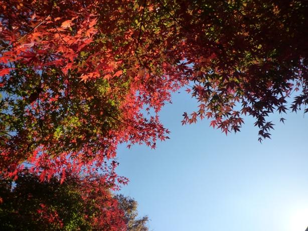 上板橋 桜川 体育館 紅葉