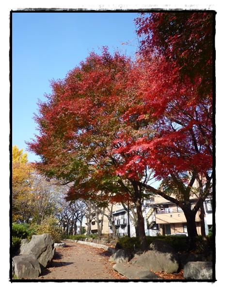 緑道 紅葉