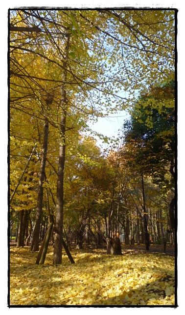 城北中央公園 紅葉