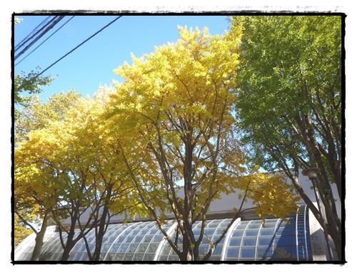 上板橋体育館 紅葉